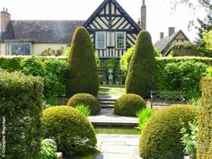 Magnificent topiary at Wollerton OId Hall gardens Source: The Galloping Gardener Photography by Charlotte Weychan