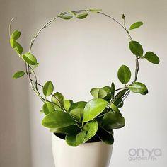 Indoor Ivy, Small Indoor Plants, Ivy Houseplant, Hoya Plants, Plant Trellis, Wire Trellis, Plant Wall, Plant Decor, Orchid Planters