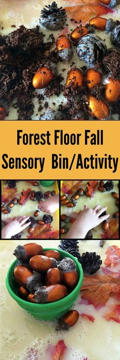 Forest Floor Fall Sensory Bin and Activity for Kids   The Jenny Evolution