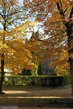 Zdjęcie numer 35 w galerii - Płock niezwykle mieni się kolorami. Taka piękna złota jesień [FOTO]