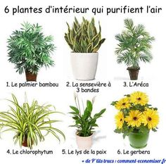 6 House Plants That Improve Air Quality According to NASA: Bamboo Palm Snake Plant Areca Palm Spider Plant Peace Lily Gerbera Daisy. Time to go get more plants ! Garden Plants, Indoor Plants, Air Plants, Rock Plants, Plantas Indoor, Home Air Purifier, Natural Air Purifier, Spider Plants, Snake Plant