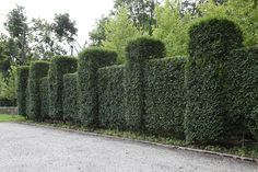 Gorgeous manicured hedges - who said it had to be knee high to look so good! Garden Fencing, Lawn And Garden, Garden Landscaping, Landscape Design, Garden Design, Martha Stewart Blog, Plant Information, Winter House, From The Ground Up