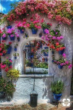 Janela florida com cor e beleza natural