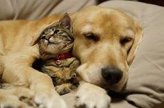「カラスに襲われ舌が裂けた子猫を保護しました」 | マイナビニュース