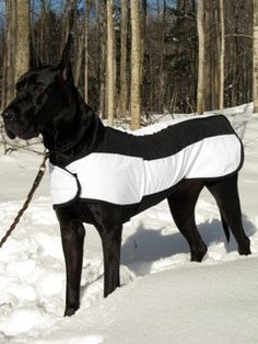 keep um warm in the winter with thermal coats when they go outside. Just because your dog is large does not mean he is cold resistant.