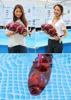 ロボット錦鯉が九州初遊泳福岡市役所前The Creatorsで今日9日まで泳いでいます 韓国のIT企業AIROが開発したAIを搭載したロボットフィッシュMIRO東京のIT技術展で話題となった魚ロボット  QBC九州ビジネスチャンネルイベント tags[福岡県]