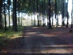 Queenie wird zum 1. Mal alleine im Wald geritten