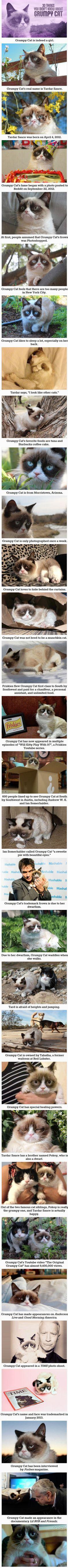 The life of Grumpy Cat
