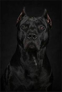 .Strikingly handsome dog. Wow.