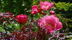 Toronto Gardens – How do you look at a collector's garden?