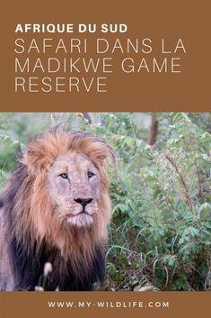 Safari dans la Madikwe Game Reserve en Afrique du Sud : récit et infos pratiques #safari #gamedrive #madikwe #madikwegamereserve #afriquedusud #southafrica