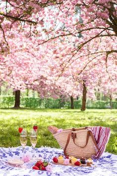 Pink Orchard, of Cherry Blossoms and a Glass of Wine with your Picnic. Picnic Date, Summer Picnic, Garden Picnic, Family Picnic, Beach Picnic, Cherry Blossom Tree, Blossom Trees, Comida Picnic, Romantic Picnics
