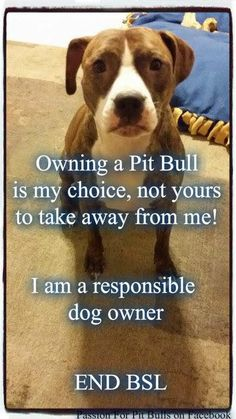 BSL takes healthy, happy dogs from loving, responsible homes. END Breed Specific Legislation!