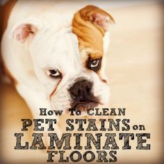 how to clean dog pee from laminate