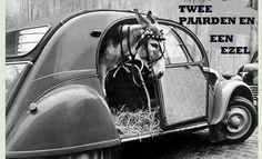 2 paarden en 1 ezel