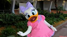 Daisy Duck is a cartoon character created in 1940 by Walt Disney Productions as the girlfriend of Donald Duck. Description from thefemalecelebrity.info. I searched for this on bing.com/images