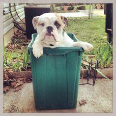 Recycle bin cutie
