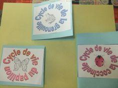 Les cycles de vie du papillon, de la grenouille et de la coccinelle