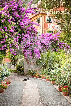 Flowers In Garden In Italy - Download From Over 53 Million High Quality Stock Photos, Images, Vectors. Sign up for FREE today. Image: 33196429