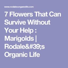 7 Flowers That Can Survive Without Your Help : Marigolds | Rodale's Organic Life