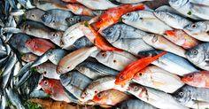Il pesce fresco dell'estate