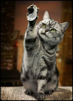 """Got it!  Cat and feather.  Support """"Southern California Cat Adoption Tails"""" www.catadoptiontails.com"""