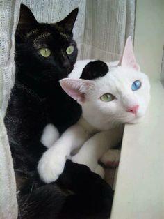#cats algún día!