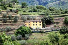 Agriturismo, Ospitalità rurale a Lucca - Il Casale degli Ulivi