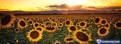 Summer Sunflowers - cover photos for Facebook - Facebook cover photos - Facebook cover photo - cool images for Facebook profile - Facebook Covers - FBcoverlover.com/maker