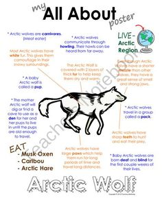 My All About Arctic Wolf Book - (Arctic/Polar Animals) from Courtney McKerley on TeachersNotebook.com (9 pages)  - Also available as a polar animal bundle pack along with Emperor Penguin, polar bear, caribou and walrus. (Workbook, worksheet, printable, unit study, lesson)