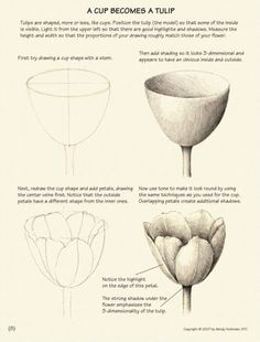 Subject Envelops You How to draw plants, by Wendy Hollender Nature Drawing, Plant Drawing, Painting & Drawing, Tulip Drawing, Botanical Drawings, Botanical Art, Botanical Illustration, Flower Drawing Tutorials, Art Tutorials