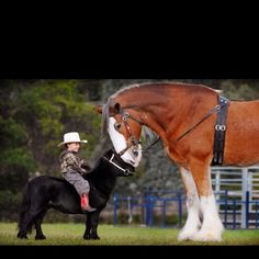 I always wanted a horse and if I still had the energy to take care of one I'd want the BIG one!