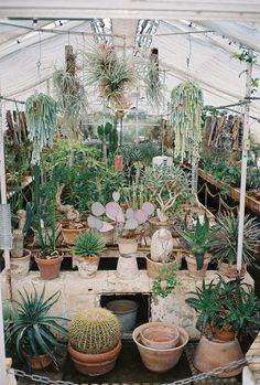 Lots of cacti. Lovely
