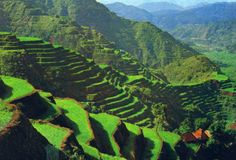 rizieres Banaue Philippines