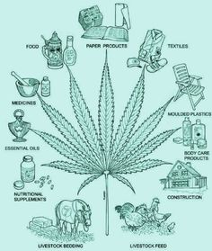 Cannabis can make thousands of different durable, high quality, environmentally sustainable products!