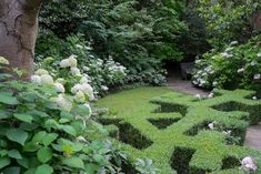 Between beds of healthy lush hydrangea bushes, a geometric box parterre leads toward the back garden.