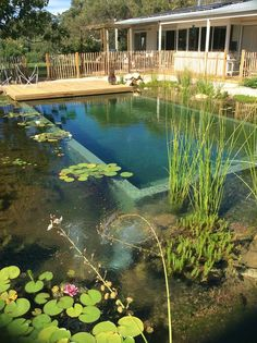 Constructed in North East Victoria, this is a shining example of our custom Natural Swim Pool design.