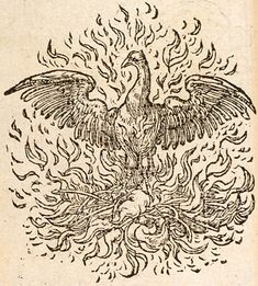 Pictura of Paradin, Claude: Devises heroïques (1551): UNICA REVIVISCO.