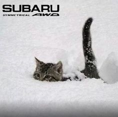 Love this...but, yeah. My Subie can plow through anything.