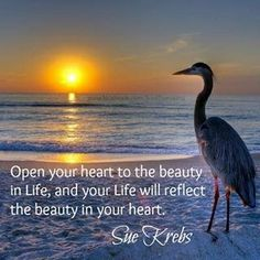 """""""Open your heart to the beauty in Life, and your Life will reflect the beauty in your heart."""" ~ Sue Krebs"""