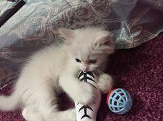 Aww #cats #love #instagood #photooftheday #beautiful #cute #happy #fashion #followme #me #follow