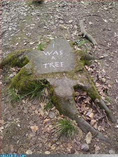 I was a tree - Epitaph :-( Save Planet Earth, Save Our Earth, Save The Planet, Save Mother Earth, Mother Nature, Image Citation, Protest Art, All Nature, Nature Quotes