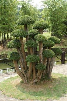 Topiary Garden, Garden Trees, Trees To Plant, Garden Deco, Garden Art, Garden Design, Garden Terrarium, Bonsai Garden, Weird Trees