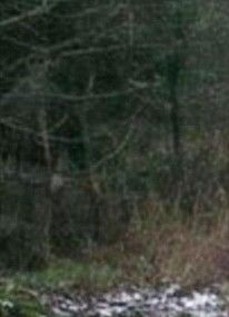 Ghost in the WoodsI think this ghost picture is amazing! I found it on at The Daily Mail, as one of their all-time top paranormal pictures and I have to agree! There are no details, but it appears that a little girl has been photographed out on a woodland walk. Zoom in and a ghostly, transparent figure is watching, with big, black eye sockets. Goosebumps!