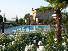 villa in Tuscany, white roses and pool.