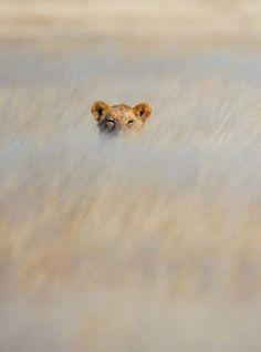 .she's watching