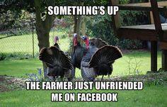 Suspicious turkey