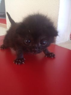 It iz Monday… so here iz some kittens (Gallery) - Katzenrassen Beautiful Cats Cute Funny Animals, Funny Animal Pictures, Cute Baby Animals, Funny Cats, Cute Kittens, Cats And Kittens, I Love Cats, Crazy Cats, Beautiful Cats