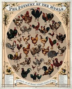 breeds:  nice poster!
