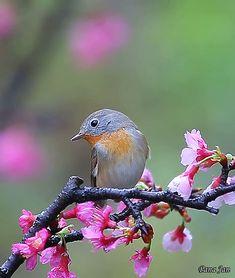 Cinemagraph, Beautiful Pictures, Nature, Animals, Birds, Flowers, Animais, Naturaleza, Animales